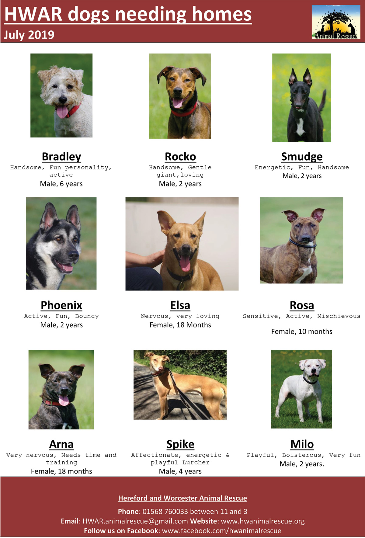 Dogs Needing A Home In Hereford